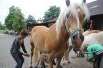 Horseback Riding Camp in Germany